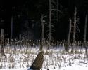 20100307-quechee-beaver-pond