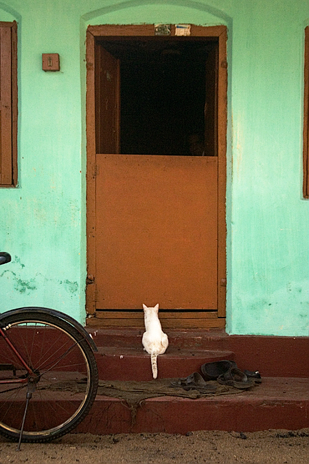 A cat waits in Cochin, Kerala, India. Seth Rosenblatt (c) 2006.