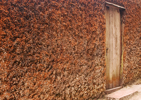 A house covered in orange moss, Darjeeling, India. Seth Rosenblatt (c) 2006.