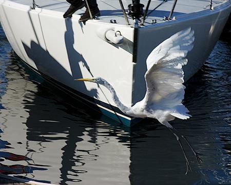 Heron, The Marina, San Francisco, CA. Seth Rosenblatt (c) 2007.